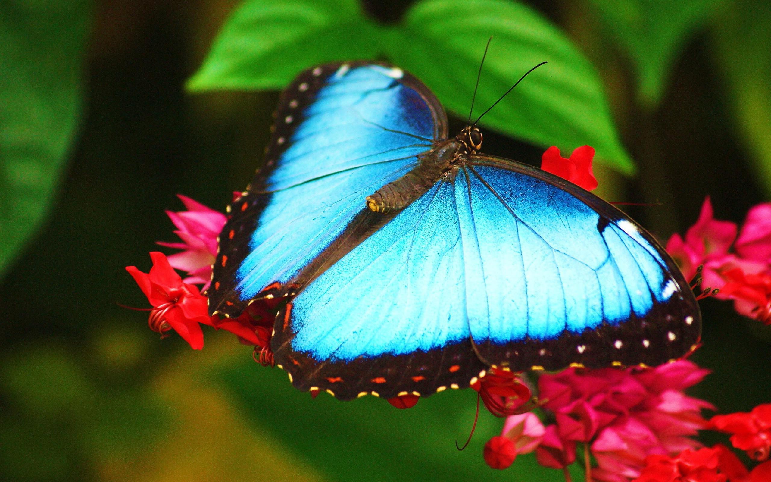 природа бабочка животные цветы синие бесплатно