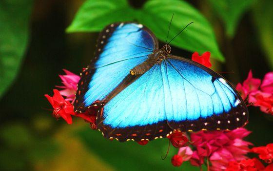 Фото бесплатно цветы, листья, бабочка