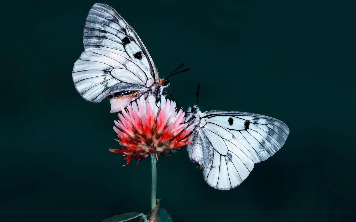 Фото бесплатно бабочки, цветок, насекомые