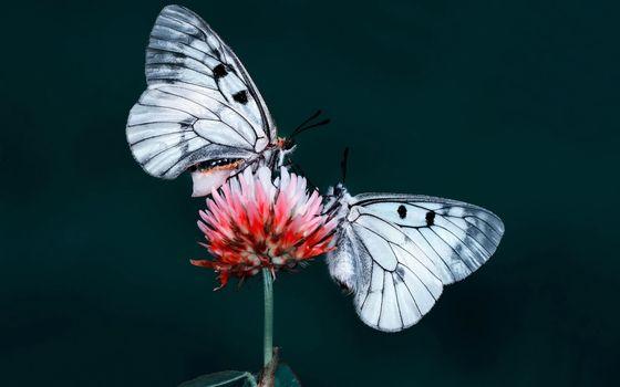 Заставка бабочки, цветок на экран