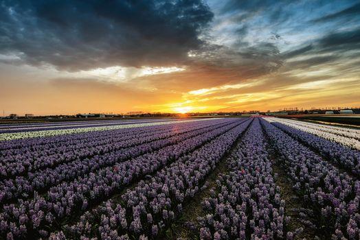 Заставки пейзаж, лиссе, нидерланды закат