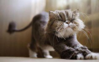 Фото бесплатно стрижка, кошка, лапы