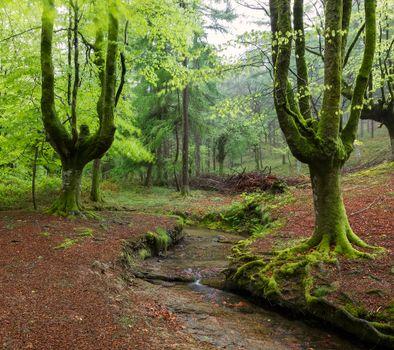 Фото бесплатно Испания, Страна Басков, природа