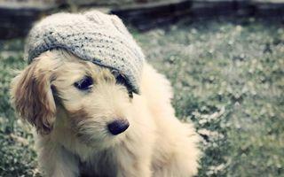 Фото бесплатно пес, морда, кепка
