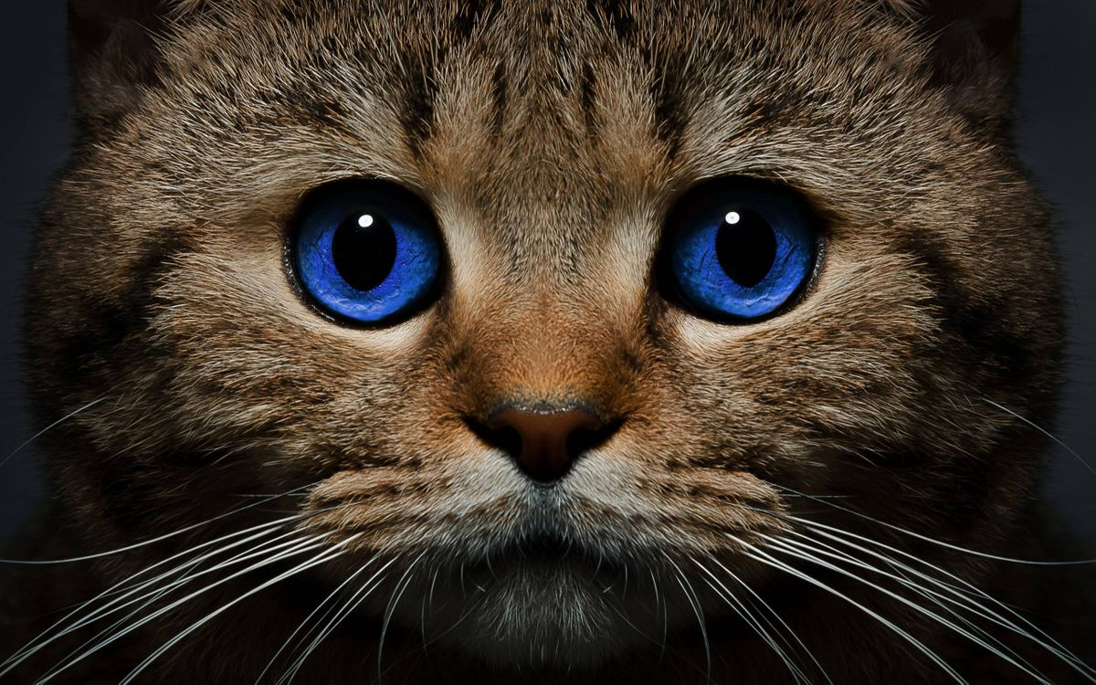 Фото бесплатно кот, голубые глаза, морда - на рабочий стол