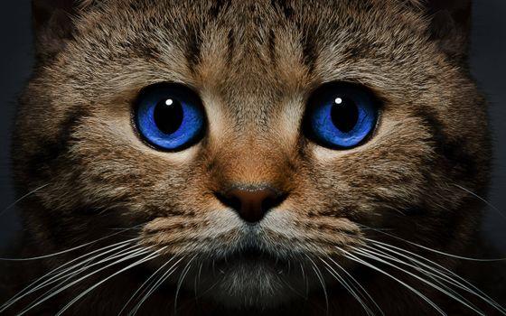 Фото бесплатно кот, голубые глаза, морда