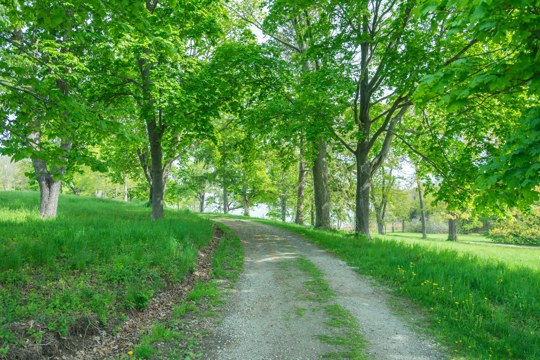 обои дорога, деревья, поле, пейзаж картинки фото