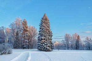 Бесплатные фото Санкт-Петербург,Павловский парк,Русская зима