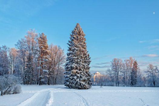 Фото бесплатно Санкт-Петербург, Павловский парк, Русская зима