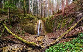 Бесплатные фото лес,деревья,водопад,природа