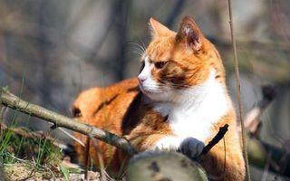 Бесплатные фото рыжий кот,отдых,на солнце,ветви