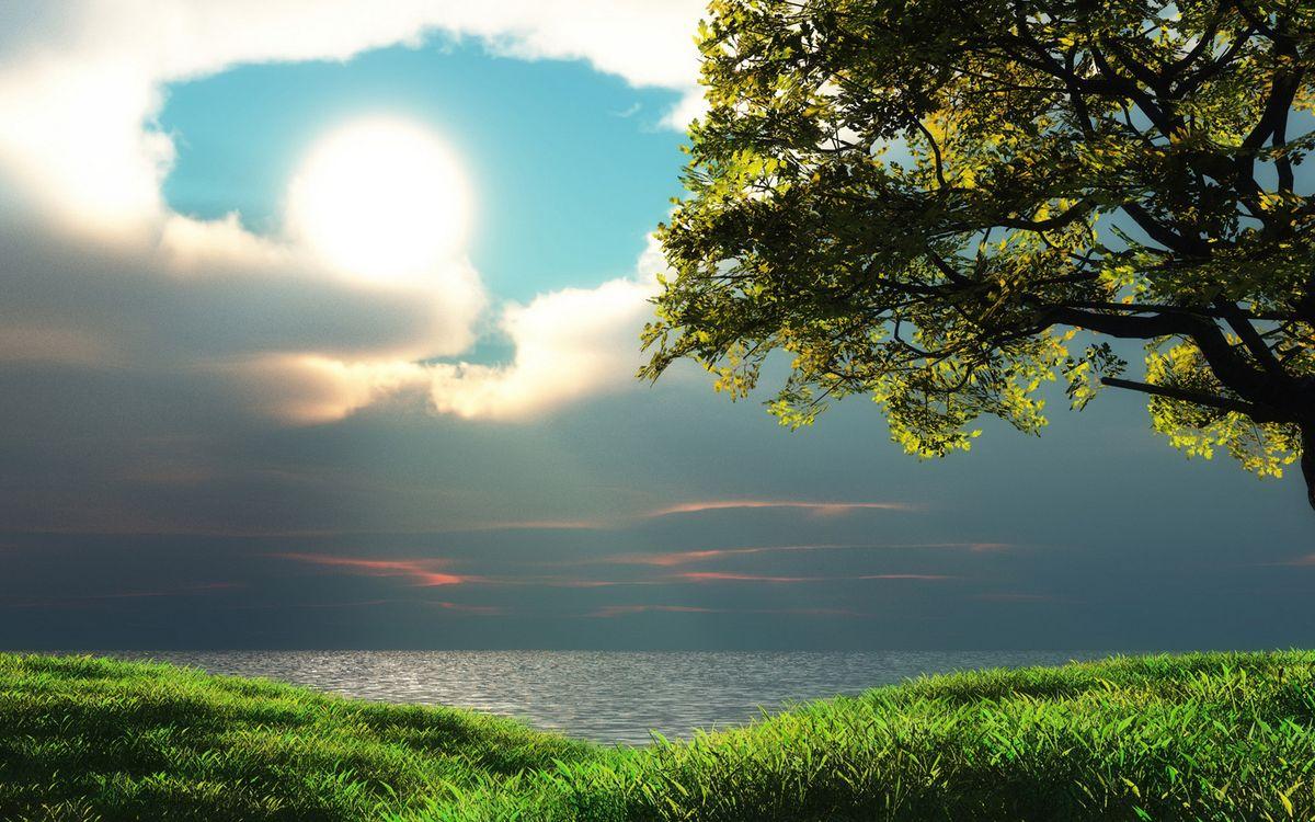 Фото бесплатно берег, трава, дерево - на рабочий стол