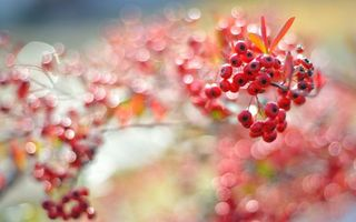 Фото бесплатно ягода, оранжевая, дерево