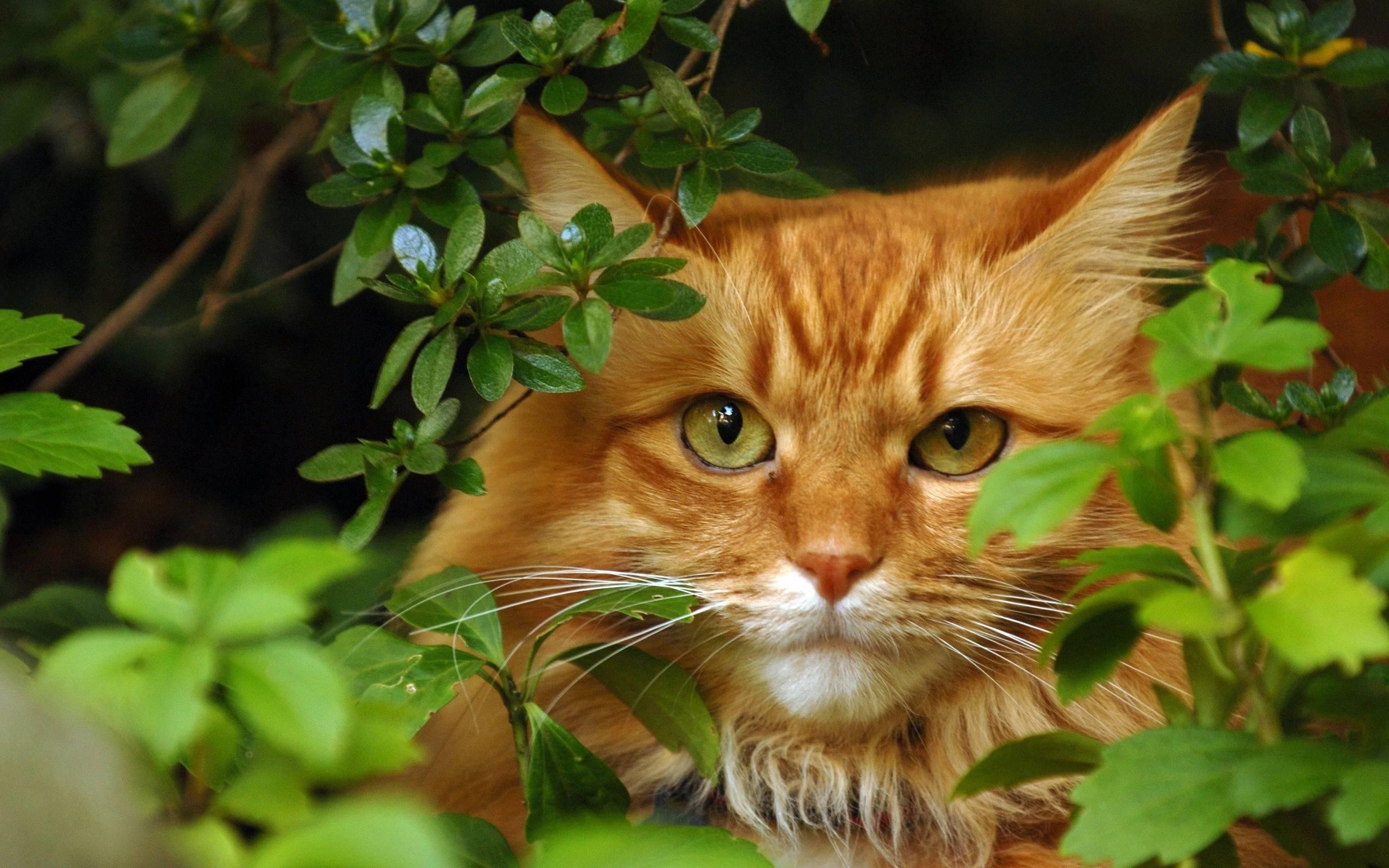 Картинки котят смешные  mirpozitivaru