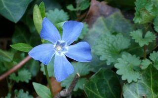 Бесплатные фото цветок,лепестки,синие,трава,листья,зеленые