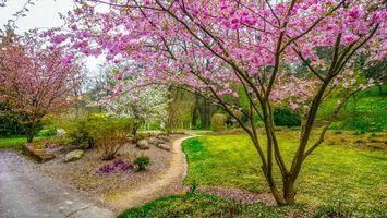 Обои Эгапарк, Эрфурт, Германия, Egapark, Erfurt, парк, сад, весна, цветение, тропинка, пейзаж