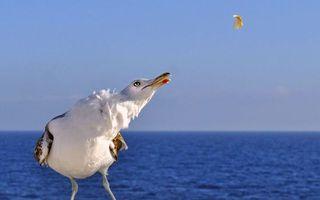 Photo free Seagull, beak, feathers
