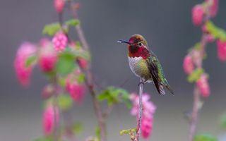 Фото бесплатно красивая колибри, крупный, палн