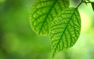 Бесплатные фото листья,зеленые,прожилки,структура,природа