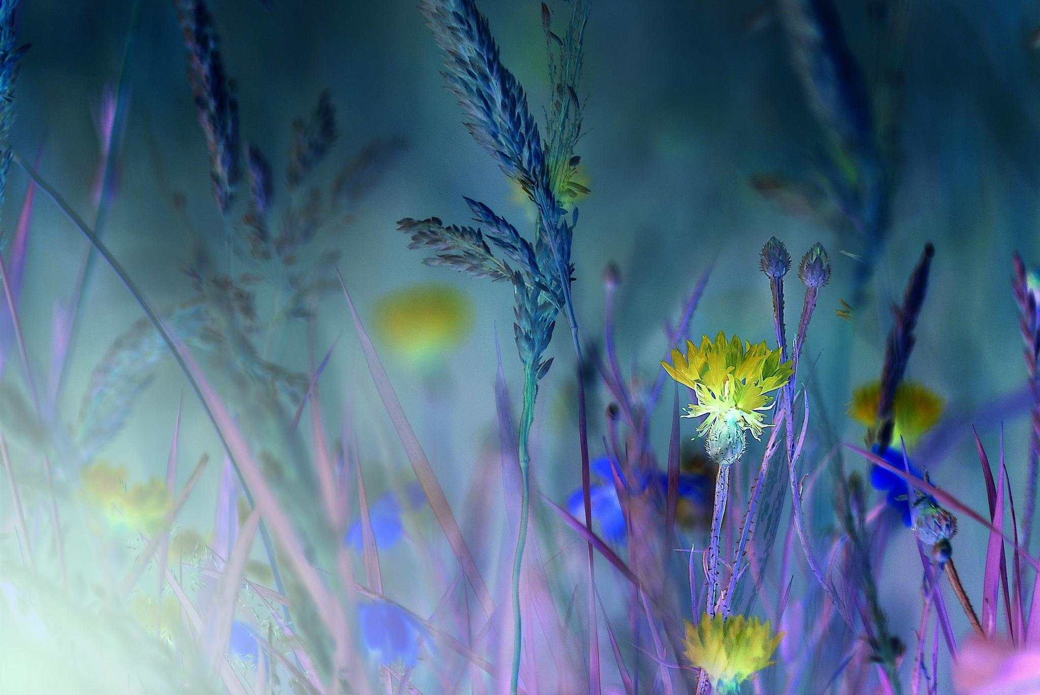 Обои В ночь на поле, трава, цветы, макро