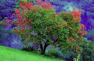 Бесплатные фото горы,Швейцария,холм,дерево,природа