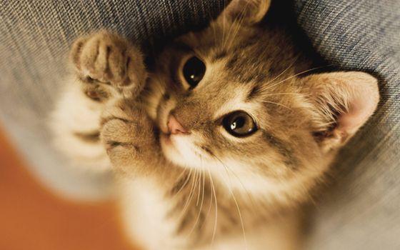 Бесплатные фото котенок,морда,глаза,лапы,шерсть
