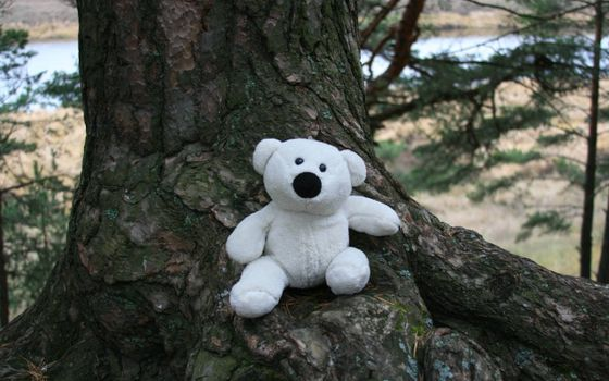 Бесплатные фото медведь плюшевый,белый,игрушка,дерево,ствол