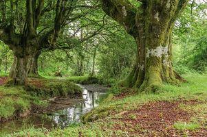Фото бесплатно лес, Otzarreta, Испания