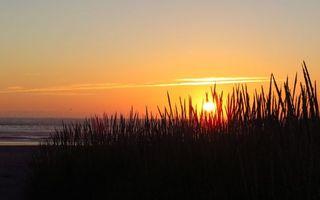 Бесплатные фото вечер,трава,море,горизонт,небо,солнце,закат