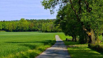Фото бесплатно дорога, асфальт, обочина, трава, поле, всходы, деревья
