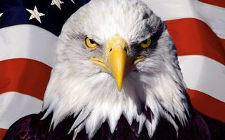 Фото бесплатно орел, клюв, глаза