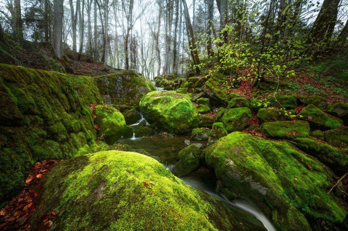 Фото бесплатно лес, деревья, речка, ручей, скалы, камни, мох, пейзаж, природа