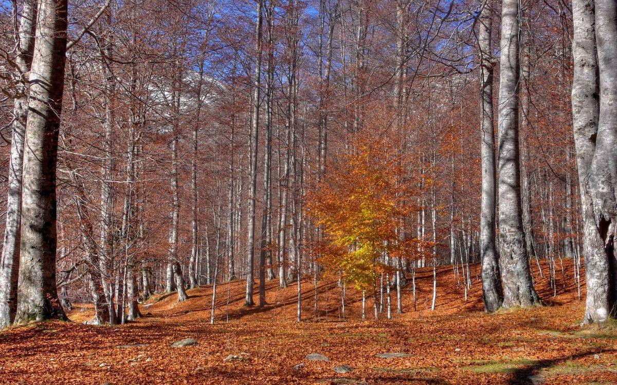 Фото бесплатно осень, роща, деревья голые - на рабочий стол