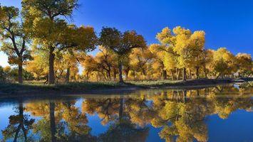 Фото бесплатно осенний парк, озеро, деревья