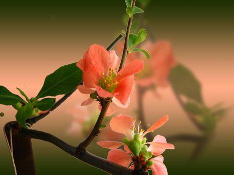 Photo free sakura, branch, spring