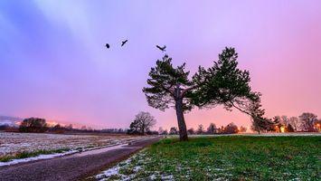 Бесплатные фото закат, поле, дорога, дерево, пейзаж