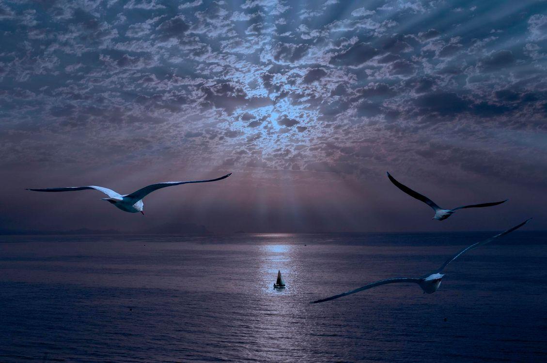Фото бесплатно закат, море, парусник, чайки, пейзаж, пейзажи