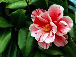 Фото бесплатно лепестки, флора, цветы