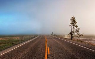 Заставки дорога,асфальт,разметка,дерево,трава,туман