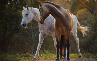 Photo free color, horses, manes