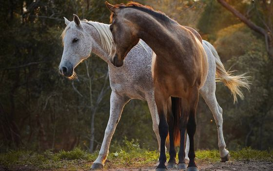 Фото бесплатно цвет, лошади, гривы