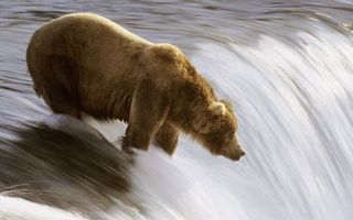 Бесплатные фото медведь,морда,шерсть,рыбачит,река,течение,водопад