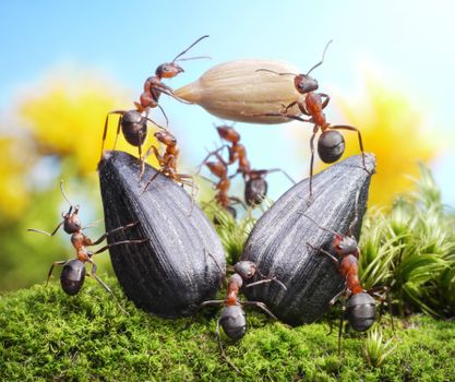 Screensaver ants, insects desktop free