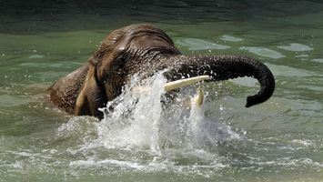 Бесплатные фото слон, морда, хобот, бивни, река, брызги
