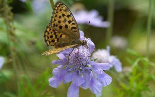 Бесплатные фото цветок,лепестки,бабочка,крылья,узор,окрас