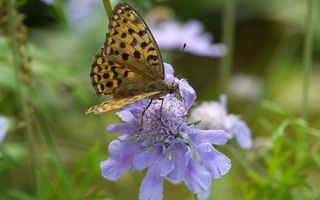 Photo free flower, petals, butterfly