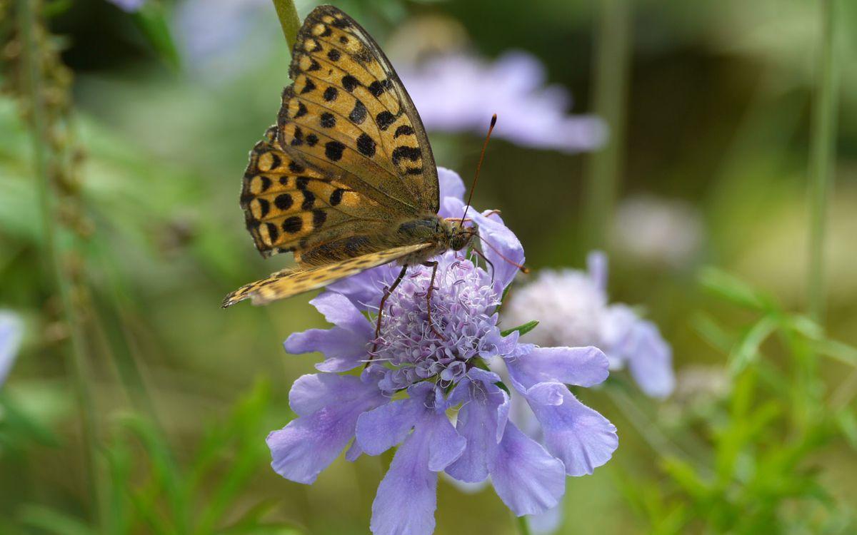 Фото бесплатно цветок, лепестки, бабочка - на рабочий стол