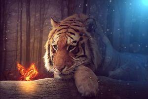Фото бесплатно тигр, взгляд, бабочка