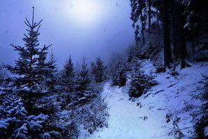 Бесплатные фото зима,ночь,луна,снег,деревья,лес,тропинка