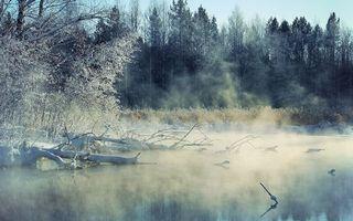 Бесплатные фото зима,озеро,коряги,дымка,деревья,кустарник,снег